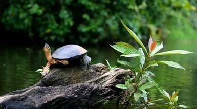 COSTA RICA VERDE      -                     San Jose, Parque Nacional Tortuguero, Reserva Biológica Bosque Nuboso Monteverde                     Volcán Arenal, Mar Caribe