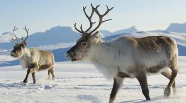 Aventura en el Ártico: Estocolmo, Laponia y Oslo