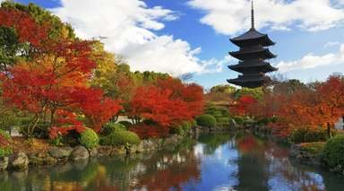 Luna de Miel en Japón