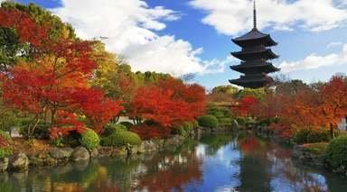 LUNA DE MIEL EN JAPÓN      -                     Parque Nacional de Fuji-Hakone-Izu, Nara, Tokio                     Kioto, Osaka