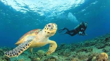 Tour por Egipto con 9 Visitas + Playas del Mar Rojo - 15 días