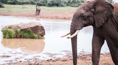 Kenia, Safari Jambo