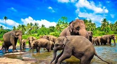 Descubre Sri Lanka con Excursiones Diarias