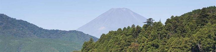 Japón y Bora Bora - Especial Novios