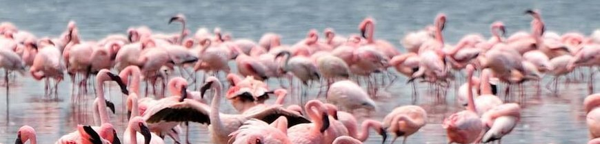 Aventura en Kenia con 7 Safaris