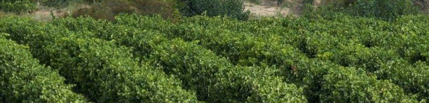 La Rioja en Estado Puro