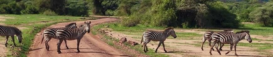 Aventura en Tanzania con 3 Safaris
