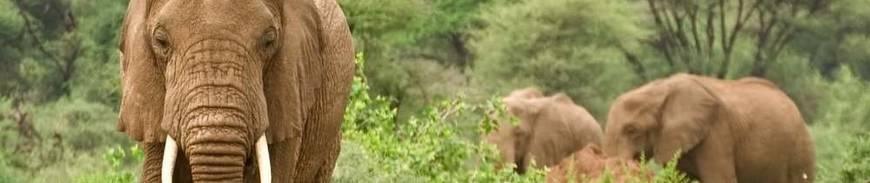 Tanzania: Safaris y Vida Salvaje