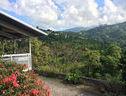 Neita S Nest  Jamaican Bed & Breakfast